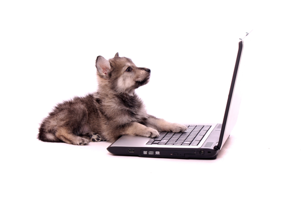 La importancia de Twitter para un blogger novato
